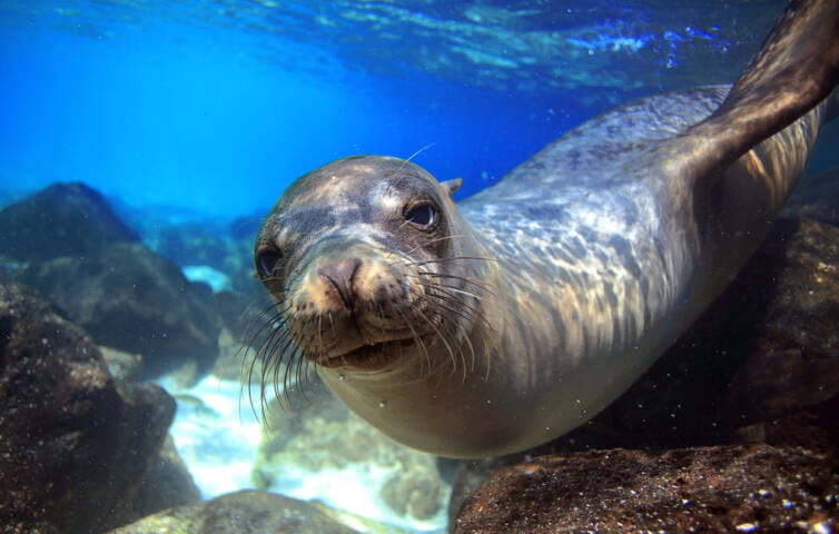 8 Fantastic Free Things to Do in the Galapagos Islands