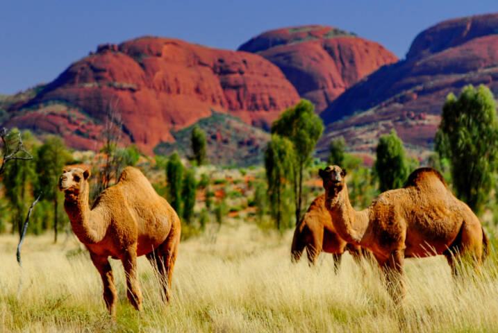 8 Amazing Images of Uluru