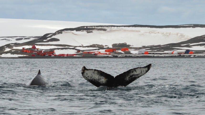 12 Things to See and Do in Antarctica