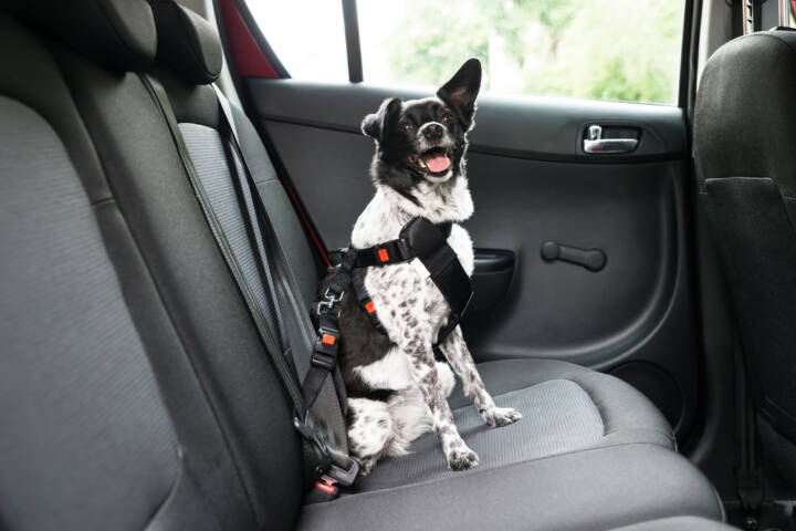 Common Mistakes You're Likely To Make While Traveling With Your Pet