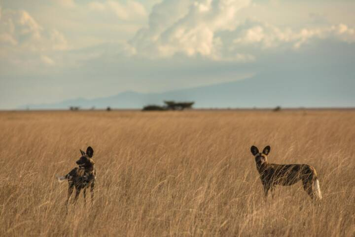 Mind-Blowing African Walking Safaris