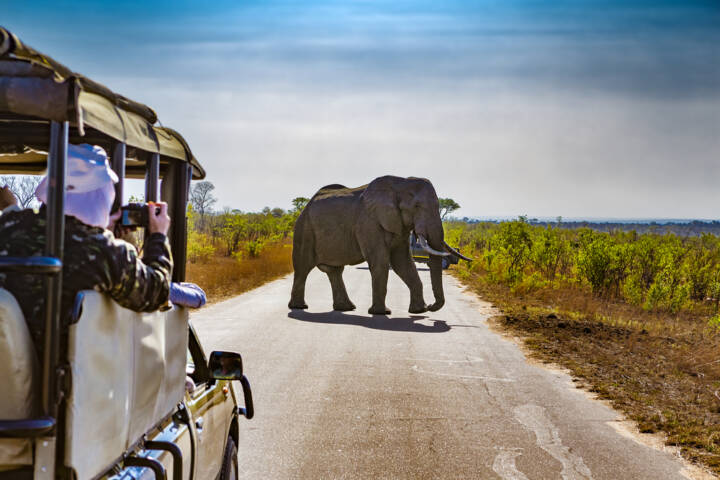 7 Things to See and Do in Botswana
