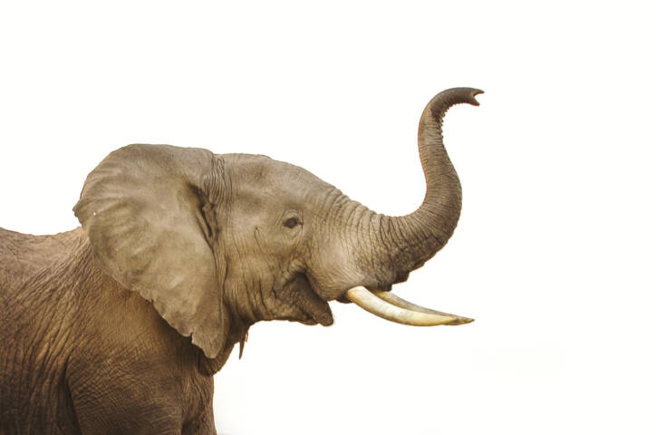 Philadelphia Zoo Elephant Exhibit Closure