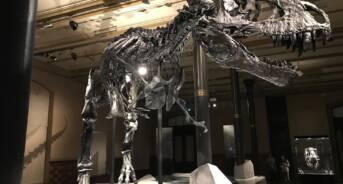 T-Rex Dinosaur Skeleton in Museum