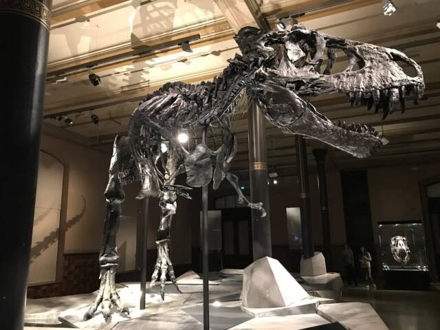 Sleepovers at the American Museum of Natural History