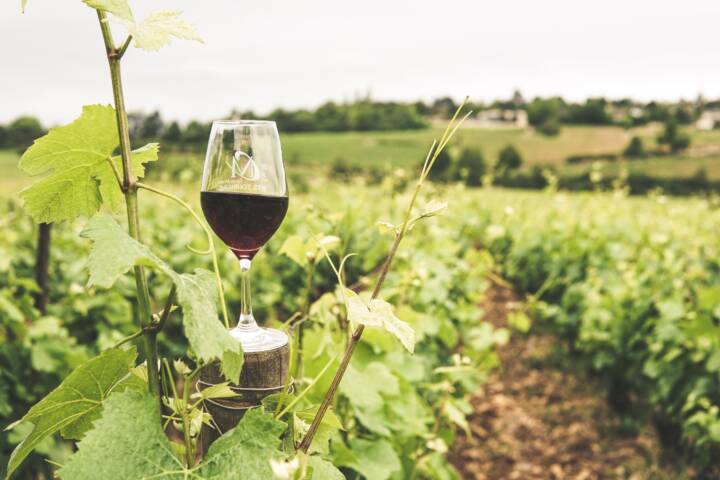 Red Wine Glass in Vineyard